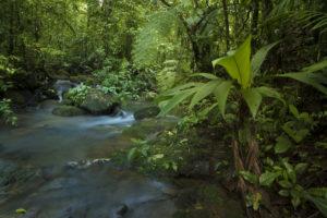 Regenwald La Tigra