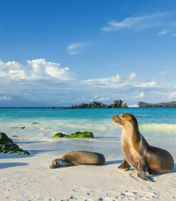 Papaya Tours bietet Galapgos Touren