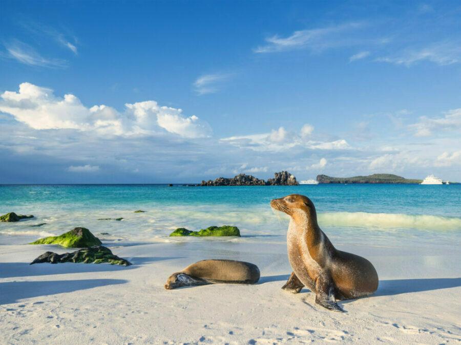 Zwei Galapagos Seelöwen am Strand