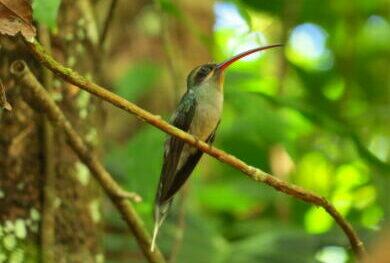 Kolibri Reisen bietet Reisen, die die Natur näher bringen