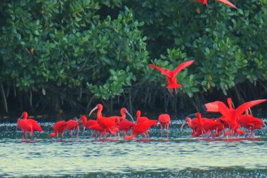 Vögel entdecken beim Reisen