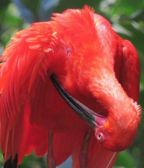 Trinidas und Tobagos Vogelwelt entdecken mit Kolibri Reisen